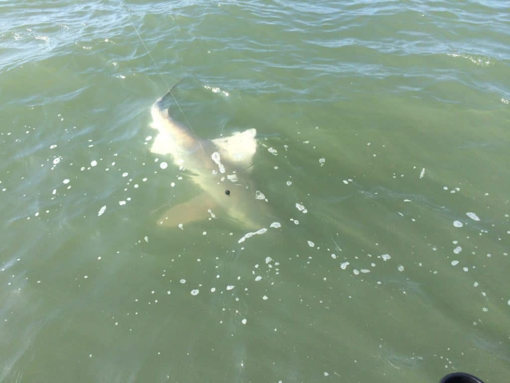myrtle beach shark fishing charters reel action fishing